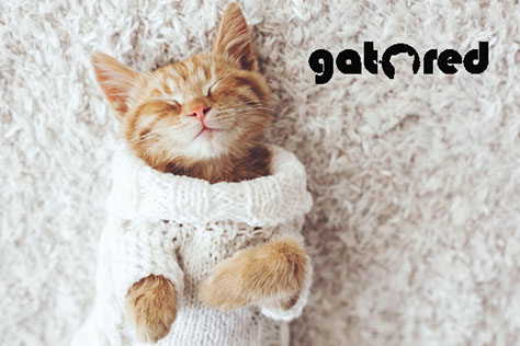 Mallas de seguridad para gatos | GatoRed